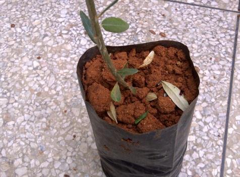 Упаковщик почвы в мешки с сеянцем
